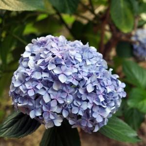 Flower contrasto