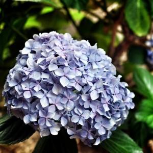 Flower Vignettatura