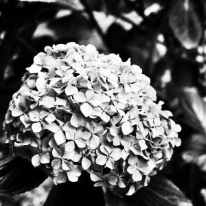 Flower BN