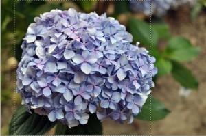 Flowers Sbagliato